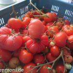 Die letzten Tomaten aus dem Garten