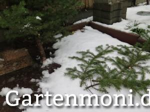 Weihnachtsbaum Äste