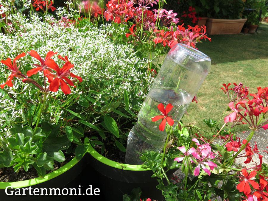 k belpflanzen auf balkon und garten immer mit wasser. Black Bedroom Furniture Sets. Home Design Ideas