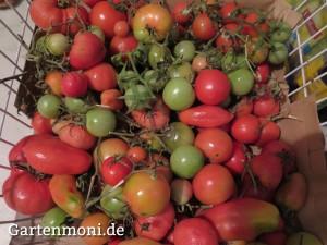 Tomaten-5