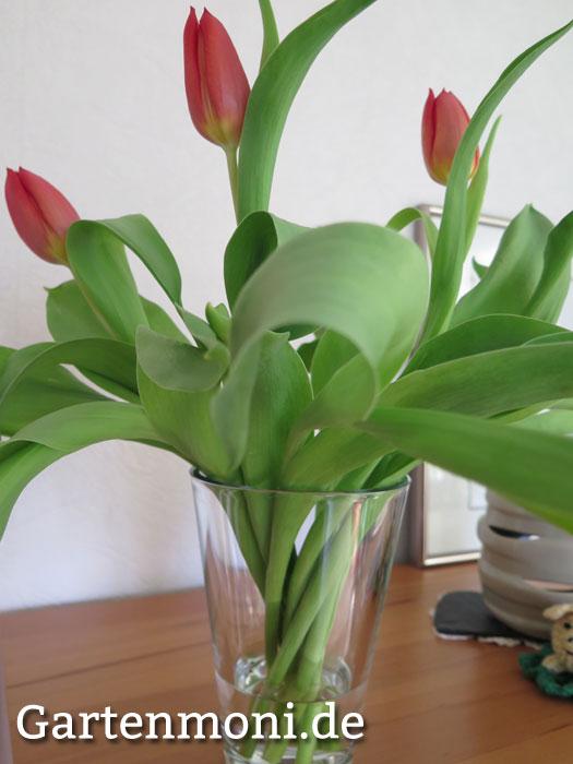 wie bleiben tulpen in der vase l nger sch n gartenmoni. Black Bedroom Furniture Sets. Home Design Ideas