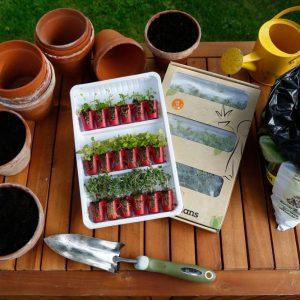 Teekräuter anbauen