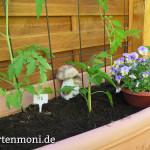 brennessel f r tomatenpflanzen gartenmoni altes wissen. Black Bedroom Furniture Sets. Home Design Ideas