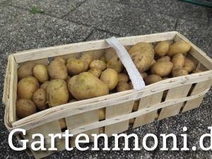 Kartoffeln, von Salatkartoffeln