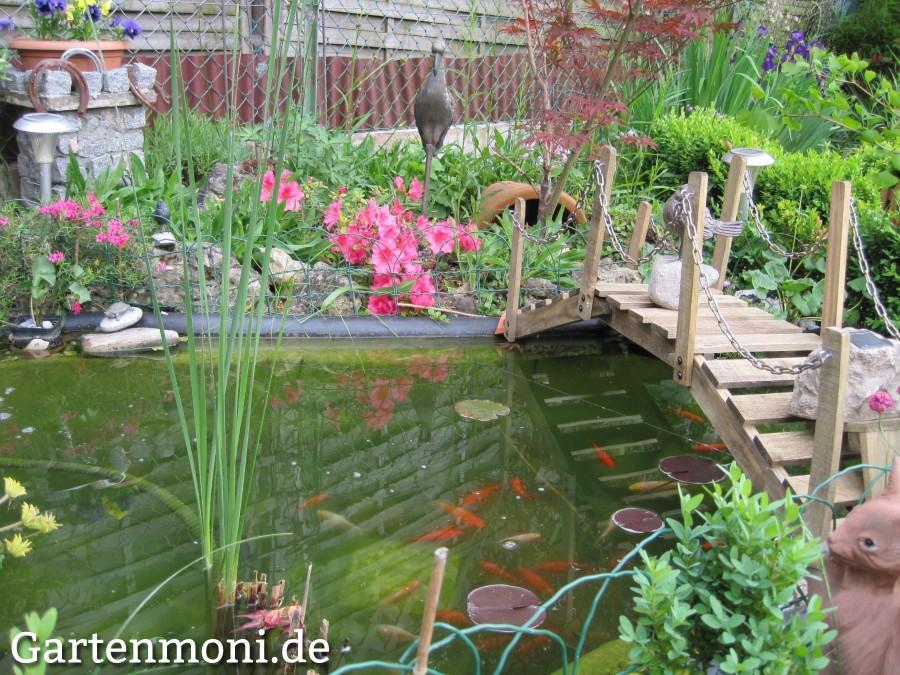 Gartenteich f r den winter vorbereiten gartenmoni for Gartenteich mit goldfischen