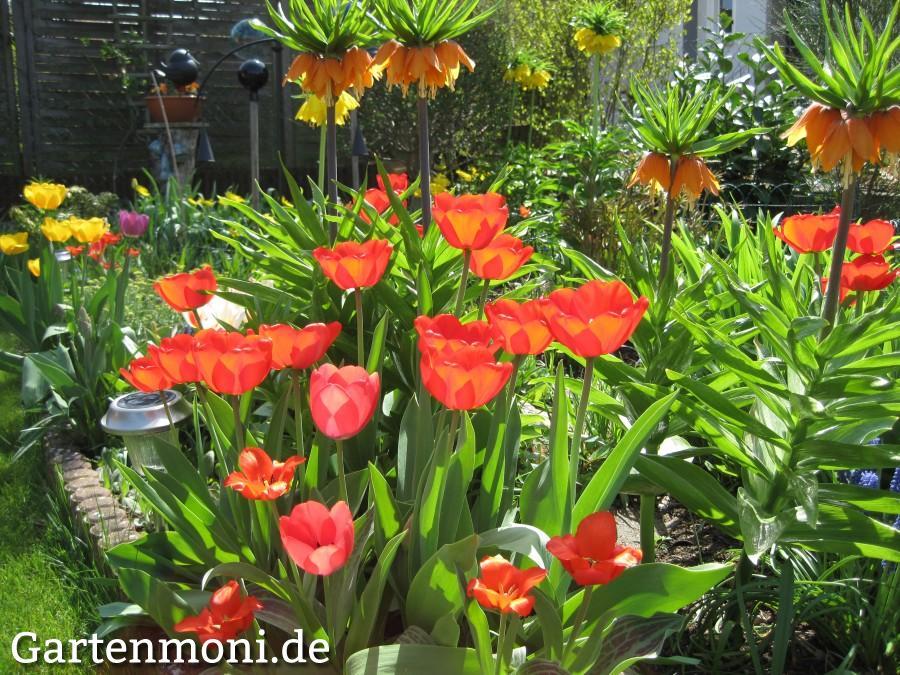 Fruhbluher Fur Das Kommende Jahr Pflanzen Gartenmoni Altes