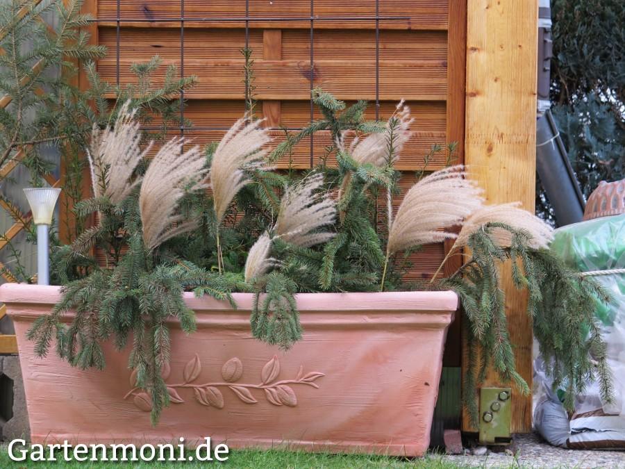 bambusbl ten als deko im winter gartenmoni altes wissen bewahren. Black Bedroom Furniture Sets. Home Design Ideas