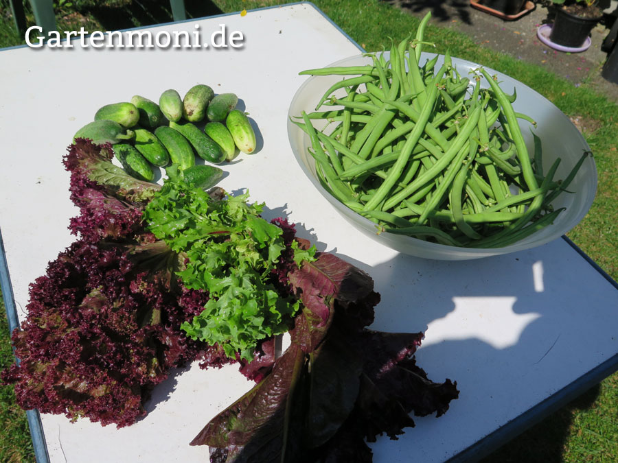 Zu welcher Tageszeit Gemüse und Kräuter ernten? - Gartenmoni - Altes ...