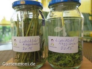 Maggikraut-Liebstoeckl-3