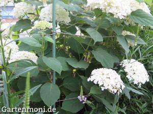 Blumen-stuetzen-5