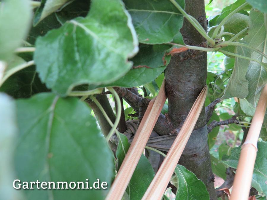 Gemeinsame Welches Material nehme ich zum Bäume anbinden? - Gartenmoni &FB_59