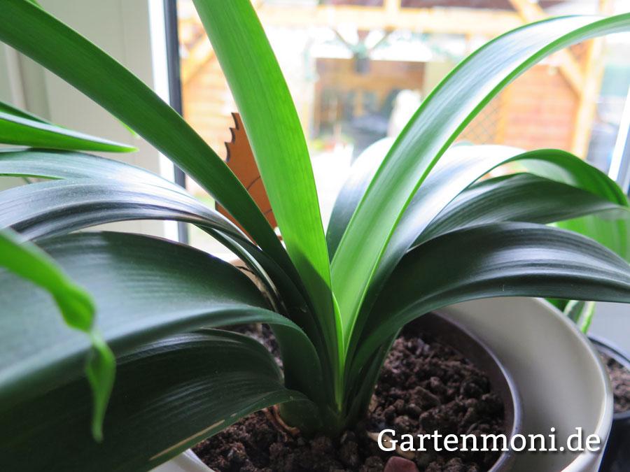 zimmerpflanzen bilder zimmerpflanzen im winter gartenmoni altes wissen bewahren. Black Bedroom Furniture Sets. Home Design Ideas