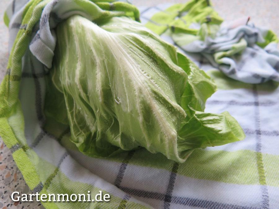 wie halte ich salat frisch und knackig gartenmoni altes wissen bewahren. Black Bedroom Furniture Sets. Home Design Ideas