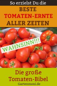 Tomatenbibel zur erfolgreichen Tomatenernte