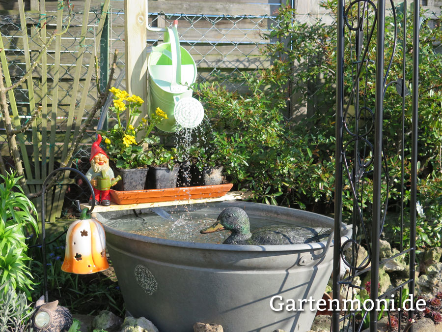 Gartenteich entfernen gartenmoni altes wissen bewahren for Gartenteich mit goldfischen