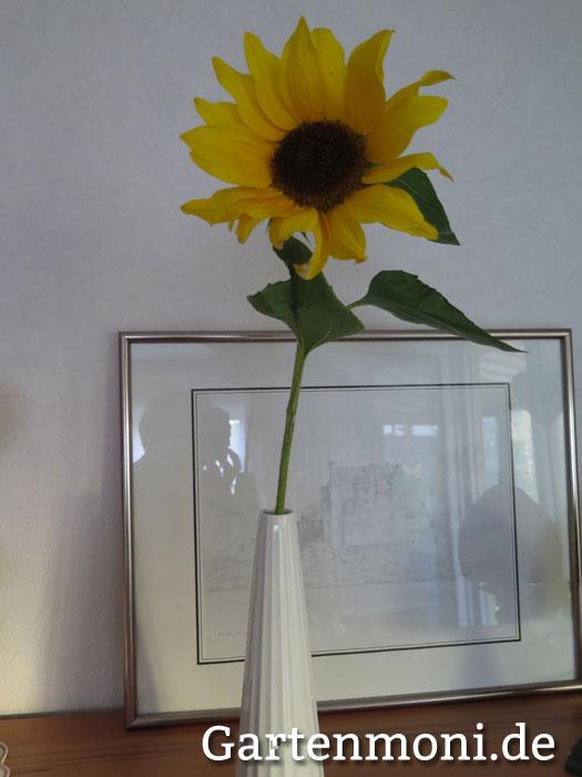 so bleiben sonnenblumen l nger in der vase haltbar gartenmoni altes wissen bewahren. Black Bedroom Furniture Sets. Home Design Ideas