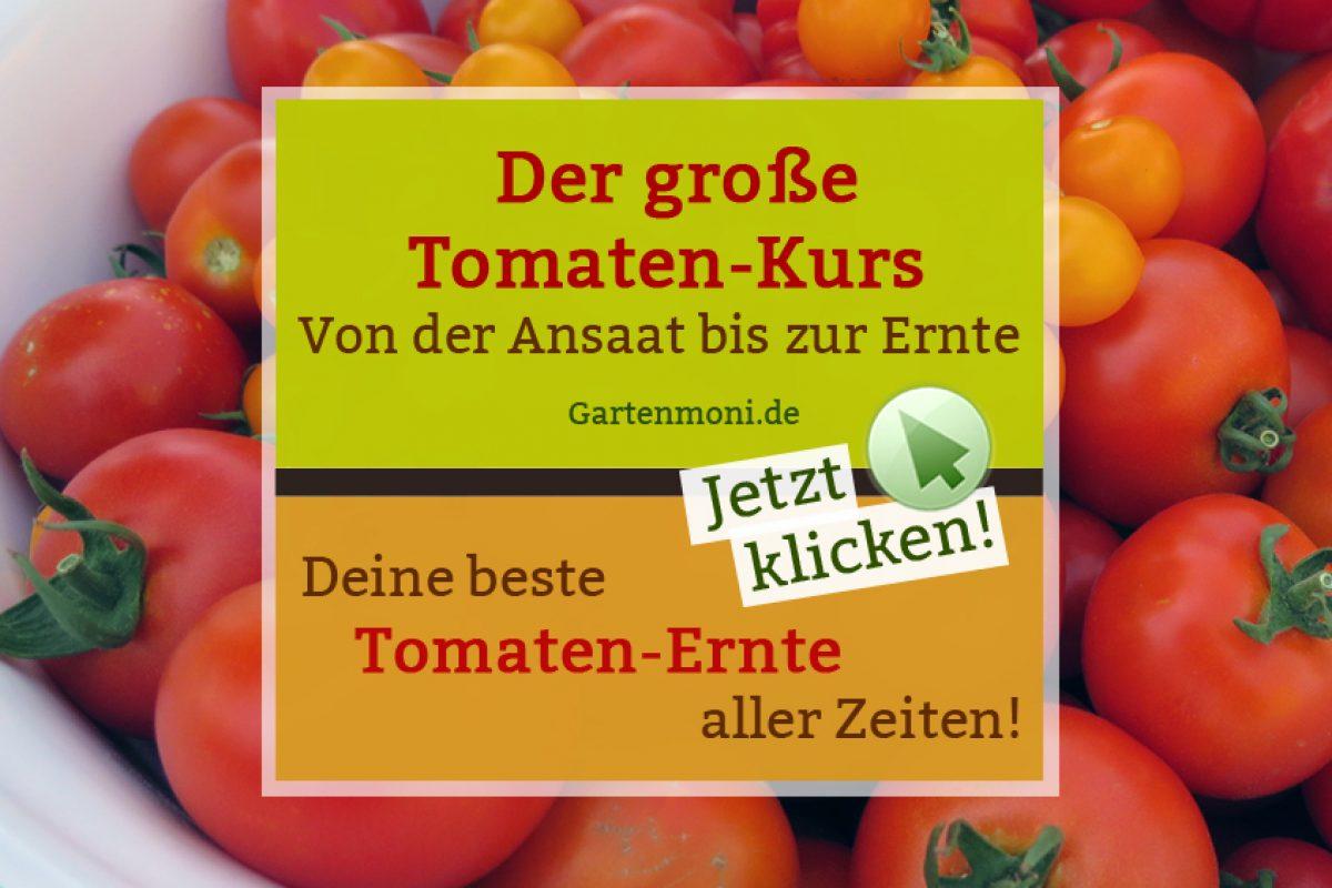 Der große Tomaten-Kurs - Von der Aussaat bis zur Ernte