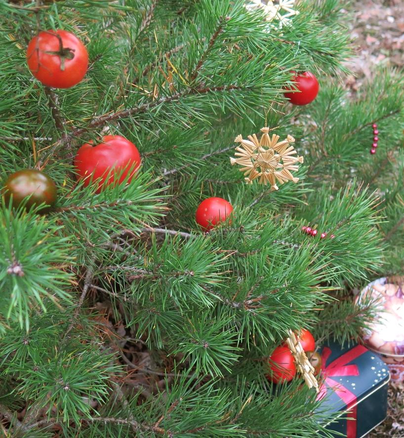 Tomaten am Weihnachtsbaum